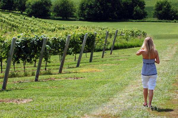 The Intoxicologist tours the grounds at Breezy Hills Vineyard